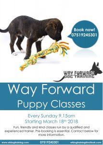 Puppy training sunday